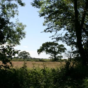 Willow Grove Photo 3